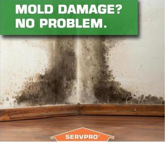 Mold Remediation Mold Growth in Home